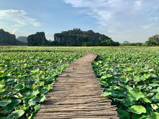 Trồng sen Nhật, thả cá và làm du lịch ở ruộng lúa, nông dân kiếm bộn tiền - 8