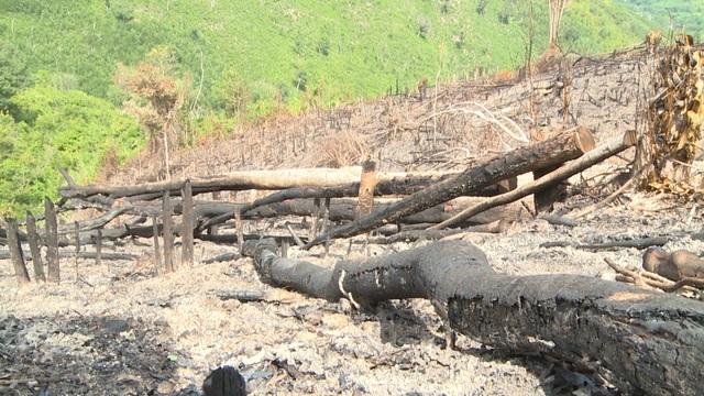 Thủ tướng yêu cầu kiểm tra, xử lý nạn chảy máu rừng già ở Phú Yên - 8