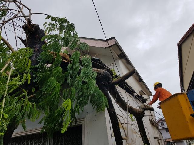 Đà Nẵng: Nhiều cây xanh bật gốc, người dân ra cửa biển bắt cá sau bão - 16