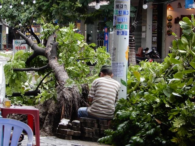Đà Nẵng: Nhiều cây xanh bật gốc, người dân ra cửa biển bắt cá sau bão - 8