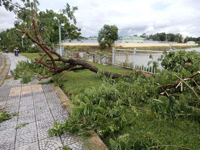 Đà Nẵng: Nhiều cây xanh bật gốc, người dân ra cửa biển bắt cá sau bão - 9