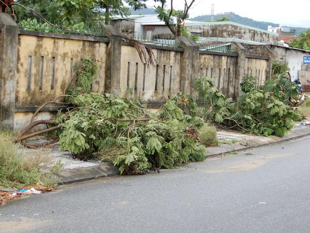 Đà Nẵng: Nhiều cây xanh bật gốc, người dân ra cửa biển bắt cá sau bão - 12