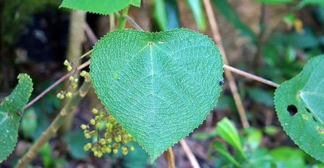 Loài thực vật kỳ lạ có chất độc giống nọc độc của bọ cạp - 1