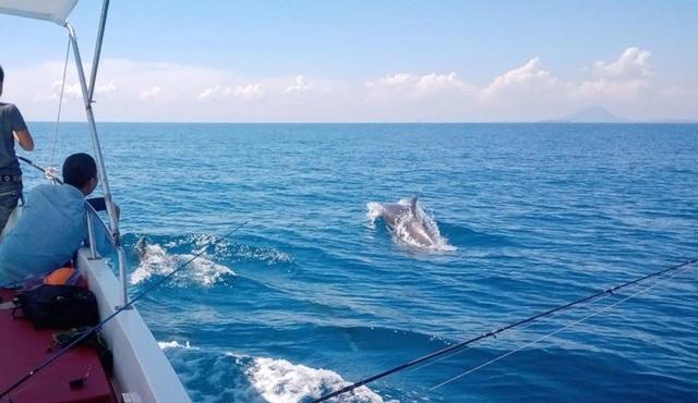 Đàn cá heo hàng trăm con bơi tung tăng trên vùng biển Phú Yên - 3