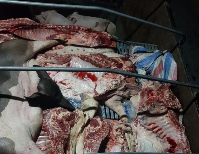 Tuyên Quang: Phát hiện gần 1 tấn lợn và thịt lợn mắc dịch tả lợn Châu Phi - 1