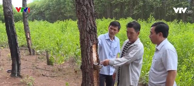 Bào ngư đông lạnh Trung Quốc gắn mác đồ Hàn bán cho dân Việt - 4