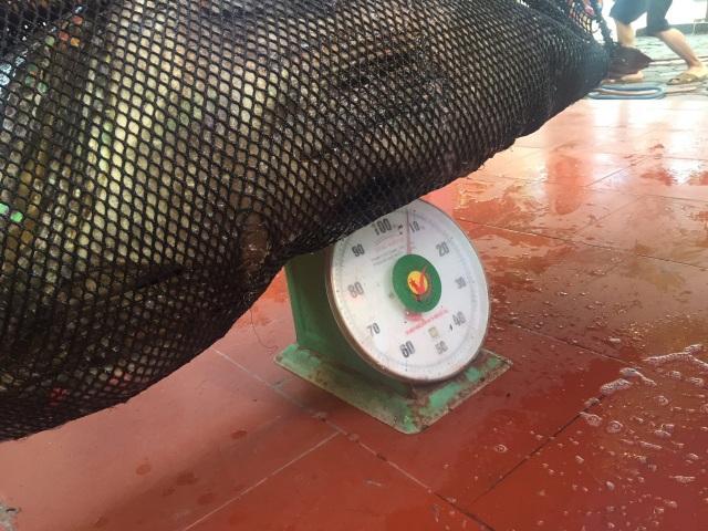 Nhà giàu Việt chi trăm triệu đồng mua cá song vang nặng cả tạ về... ăn gỏi - 3