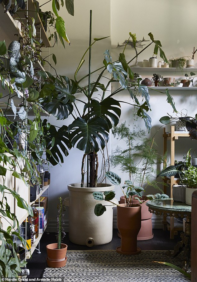 """Chàng trai Australia biến ngôi nhà thành """"rừng nhiệt đới"""" - 3"""