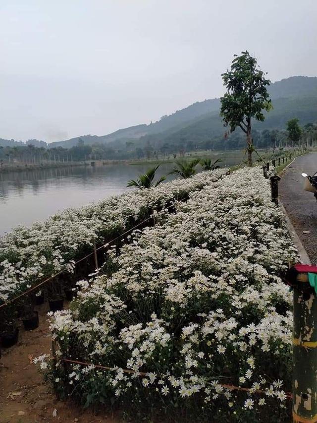 Thung lũng hoa Phủ Quỳ, điểm check in tuyệt đẹp giữa núi đồi xứ Nghệ - 1