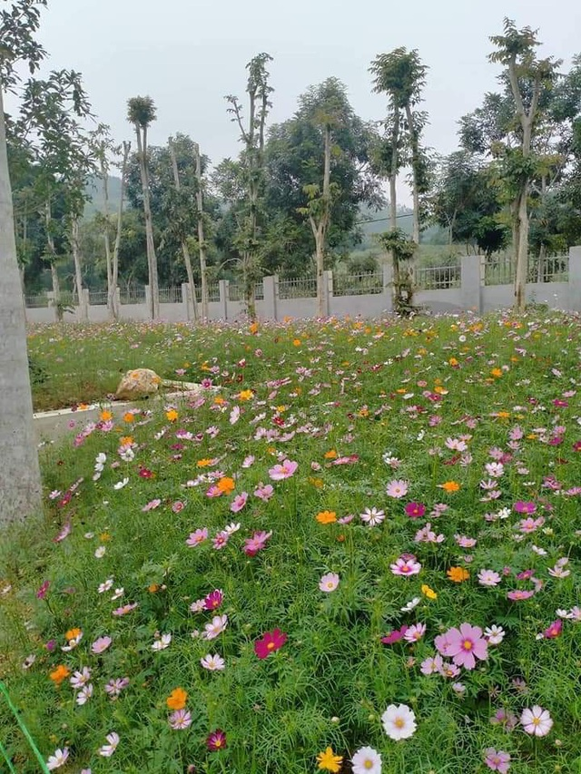 Thung lũng hoa Phủ Quỳ, điểm check in tuyệt đẹp giữa núi đồi xứ Nghệ - 6