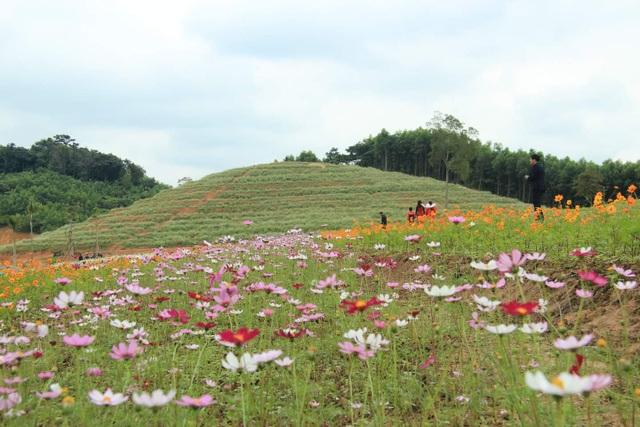 Thung lũng hoa Phủ Quỳ, điểm check in tuyệt đẹp giữa núi đồi xứ Nghệ - 5