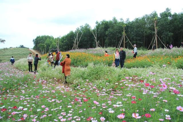 Thung lũng hoa Phủ Quỳ, điểm check in tuyệt đẹp giữa núi đồi xứ Nghệ - 4