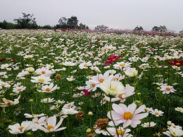 Thung lũng hoa Phủ Quỳ, điểm check in tuyệt đẹp giữa núi đồi xứ Nghệ - 9