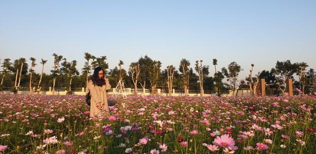 Thung lũng hoa Phủ Quỳ, điểm check in tuyệt đẹp giữa núi đồi xứ Nghệ - 10