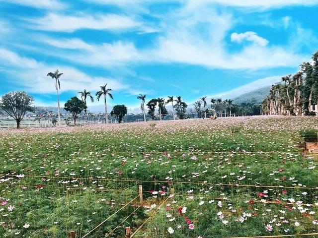 Thung lũng hoa Phủ Quỳ, điểm check in tuyệt đẹp giữa núi đồi xứ Nghệ - 11