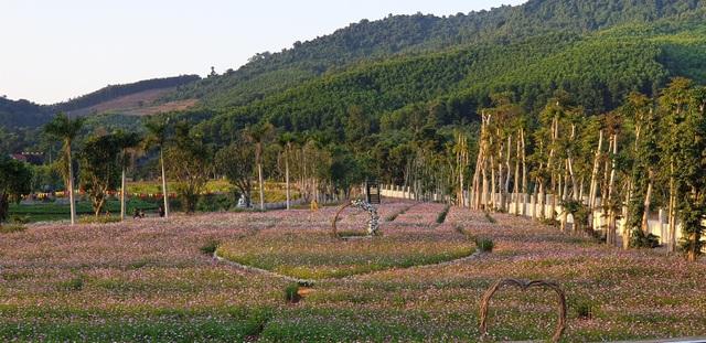 Thung lũng hoa Phủ Quỳ, điểm check in tuyệt đẹp giữa núi đồi xứ Nghệ - 8