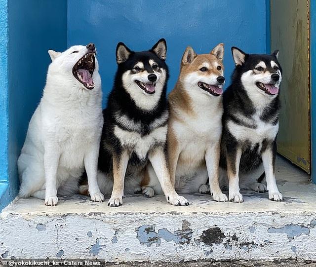 """Bật cười với bộ ảnh về chú chó """"phá đám đỉnh cao"""" - 3"""