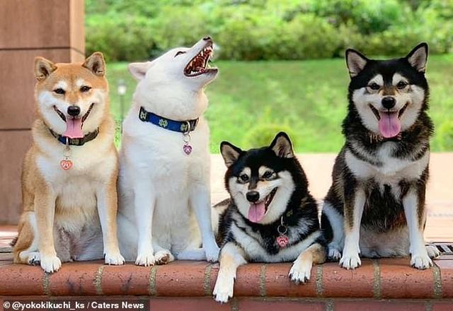 """Bật cười với bộ ảnh về chú chó """"phá đám đỉnh cao"""" - 6"""
