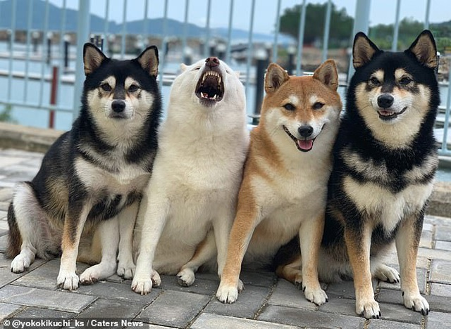 """Bật cười với bộ ảnh về chú chó """"phá đám đỉnh cao"""" - 9"""