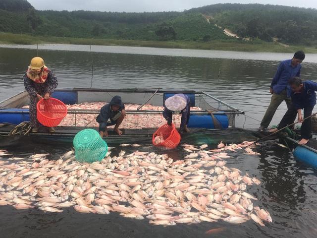 Dân điêu đứng vì hàng chục tấn cá chết trắng sau những trận mưa lớn - 3