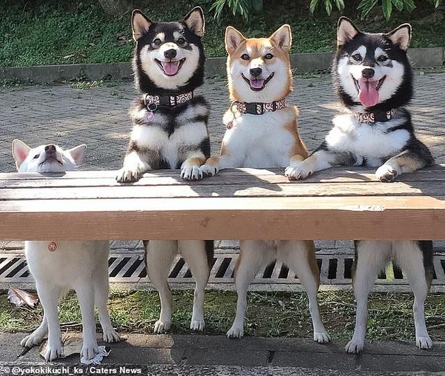 """Bật cười với bộ ảnh về chú chó """"phá đám đỉnh cao"""" - 4"""