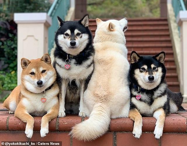 """Bật cười với bộ ảnh về chú chó """"phá đám đỉnh cao"""" - 8"""