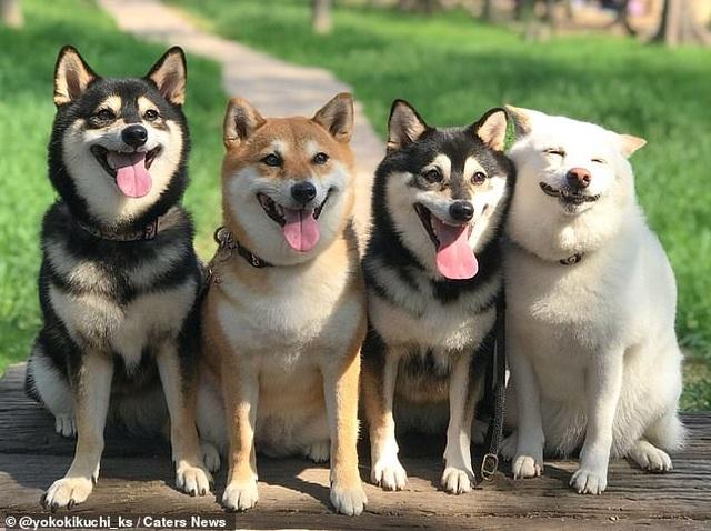 """Bật cười với bộ ảnh về chú chó """"phá đám đỉnh cao"""" - 1"""