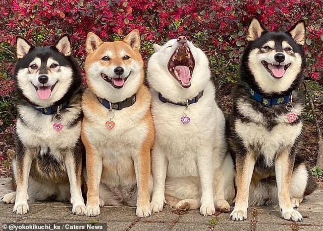 """Bật cười với bộ ảnh về chú chó """"phá đám đỉnh cao"""" - 2"""