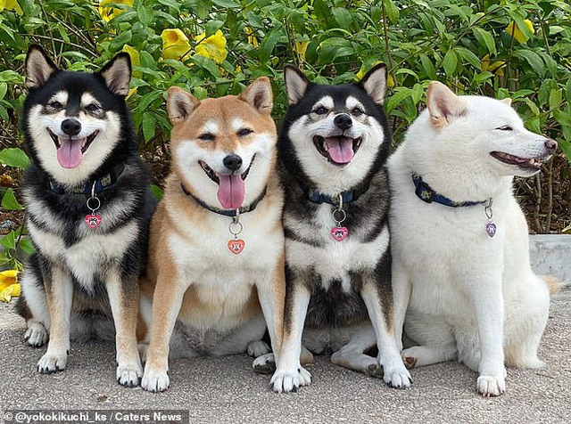 """Bật cười với bộ ảnh về chú chó """"phá đám đỉnh cao"""" - 7"""