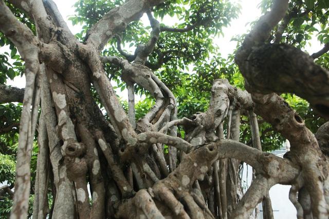 """Sanh cổ """"Ngũ long tranh châu"""" mua từ năm 1996 với giá 100 cây vàng - 7"""