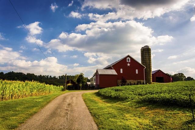 """Đất nông nghiệp Mỹ tăng kỷ lục, trở thành kênh đầu """"vàng"""" trong đại dịch - 1"""