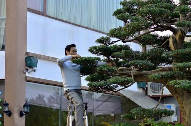 Tay chơi Hà Nội bán nhà trên phố để sở hữu cây tùng hơn 300 năm tuổi - 5