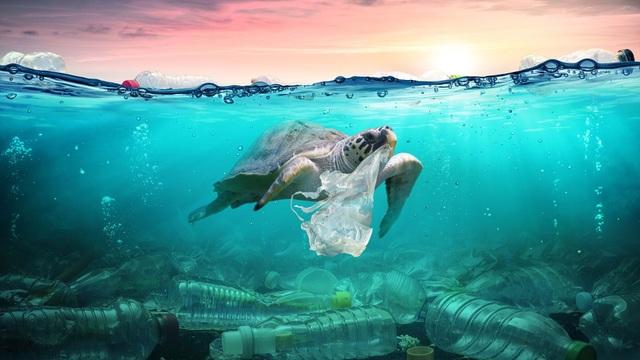 Tại sao cá thường nhầm rác thải nhựa là thức ăn? - 1