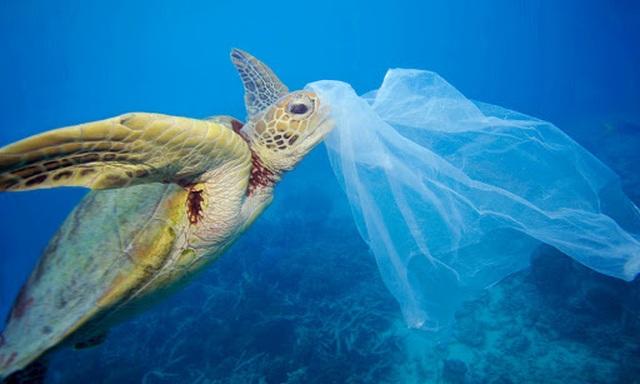 Tại sao cá thường nhầm rác thải nhựa là thức ăn? - 2