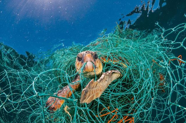 Tại sao cá thường nhầm rác thải nhựa là thức ăn? - 3