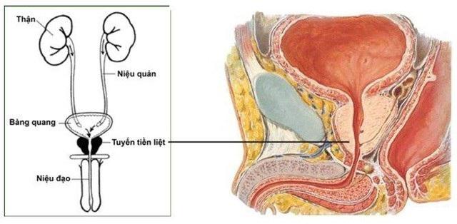 Bí quyết giúp giảm nguy cơ mắc ung thư tuyến tiền liệt - 1
