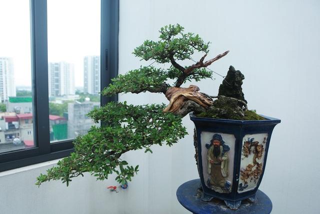 """Nghệ nhân Hà Nội bật mí về bonsai kích thước nhỏ nhưng giá """"khủng"""" - 10"""