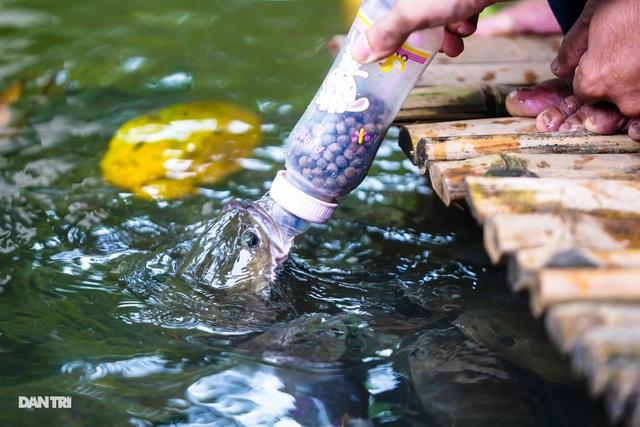 Về Cồn Sơn xem cá lóc… bú bình, ăn cơm phải… đút - 11