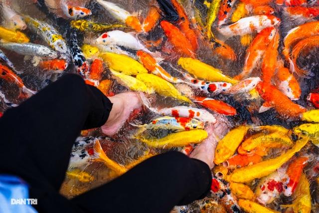Về Cồn Sơn xem cá lóc… bú bình, ăn cơm phải… đút - 3