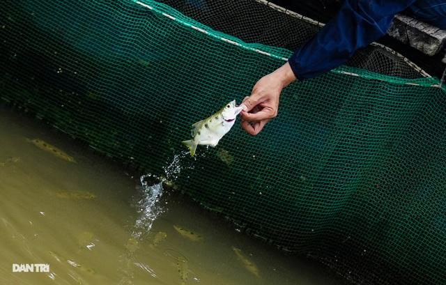 Về Cồn Sơn xem cá lóc… bú bình, ăn cơm phải… đút - 5