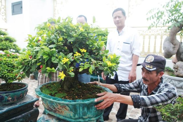 """Nghệ nhân Hà Nội bật mí về bonsai kích thước nhỏ nhưng giá """"khủng"""" - 7"""