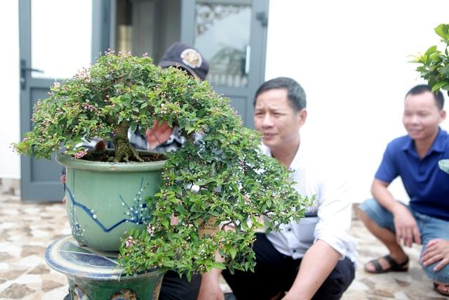 """Nghệ nhân Hà Nội bật mí về bonsai kích thước nhỏ nhưng giá """"khủng"""" - 8"""