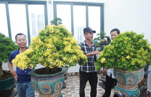 """Nghệ nhân Hà Nội bật mí về bonsai kích thước nhỏ nhưng giá """"khủng"""" - 9"""