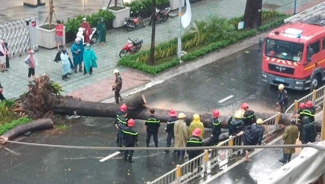 Cây cổ thụ cao hàng chục mét đổ đè người đàn ông trên phố Sài Gòn - 1