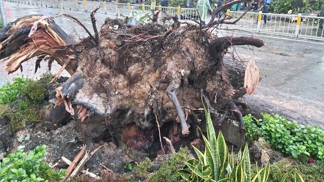 Cây cổ thụ cao hàng chục mét đổ đè người đàn ông trên phố Sài Gòn - 3