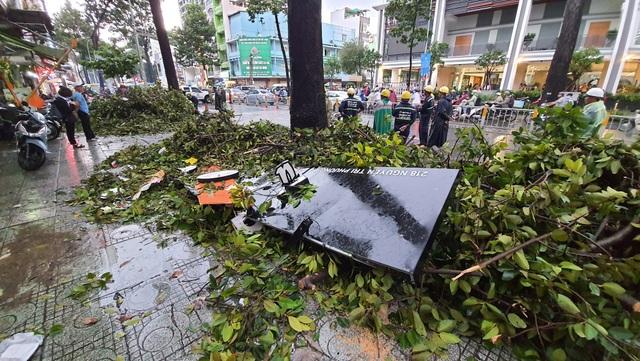 Cây cổ thụ cao hàng chục mét đổ đè người đàn ông trên phố Sài Gòn - 6