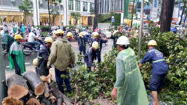 Cây cổ thụ cao hàng chục mét đổ đè người đàn ông trên phố Sài Gòn - 7