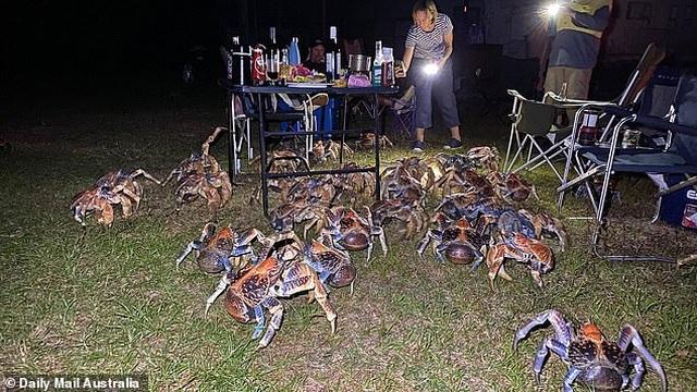 Đàn cua khổng lồ ồ ạt kéo tới phá hỏng bữa tiệc nướng ngoài trời - 1