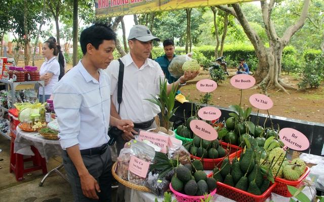 Phú Yên: Khai trương tuyến du lịch cao nguyên Vân Hòa - 3