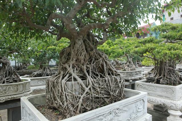 Vườn sanh cổ xứ Huế có giá triệu USD của đại gia Vĩnh Phúc - 11